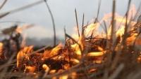 Почти 60 пожаров и 14 спасенных жизней: итоги недели в Крыму