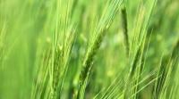 Крымские аграрии начали уборочную кампанию