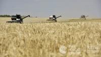 Крымская жатва: аграрии планируют собрать не менее 1,3 млн тонн зерна