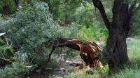Коммунальщики пересчитают опасные деревья в Симферополе
