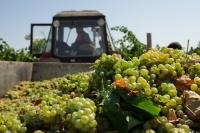 В Минсельхозе поддержали инициативу Ассоциации виноградарей и виноделов «Севастополь»