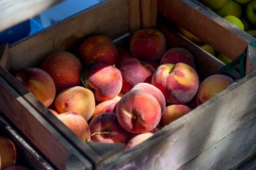 Севастополь ждёт богатый урожай персиков