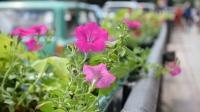 В Симферополе выбрали дворы с лучшими зелеными зонами и цветниками