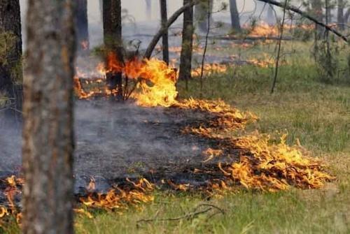 Ялтинскому заповеднику нужно 100 миллионов рублей, чтобы решить проблему лесных пожаров