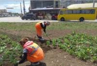 В администрации Симферополя объяснили почему местные жители недосчитались 2500 цветов