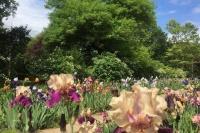 Ботанический сад в Симферополе возобновил работу: что сейчас цветет