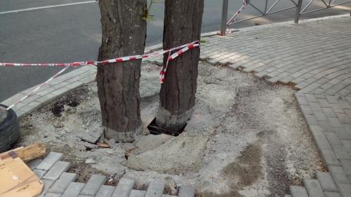 По поручению Ивана Имгрунта залитые бетоном деревья на улице Свердлова спасут от гибели