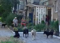 Керчане просят администрацию принять меры к численности бездомных животных на улицах города