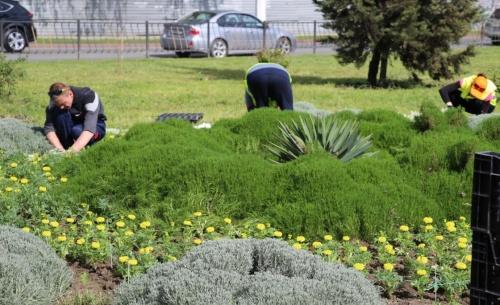 Администрацию Керчи через суд обязали провести инвентаризацию зеленых насаждений