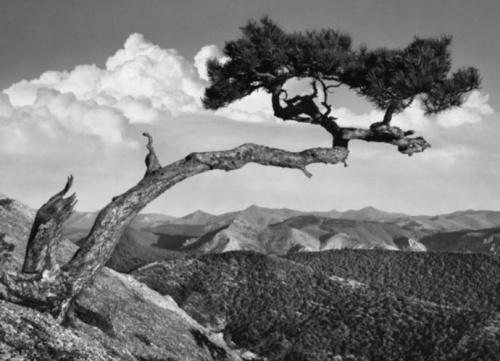Визуальное безмолвие Виктора Булычева: фотовыставка в Симферополе
