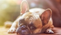 В России могут ввести регистрацию собак