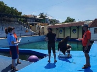 Севастопольский дельфинарий могут закрыть за нарушение законодательства