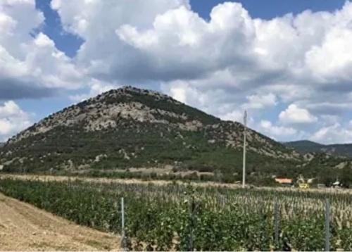 В Судаке реализуется инвестпроект по виноградарству и виноделию