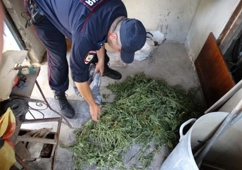 """Поливал, удобрял, окучивал: В Керчи выявили местного """"наркобарона"""""""