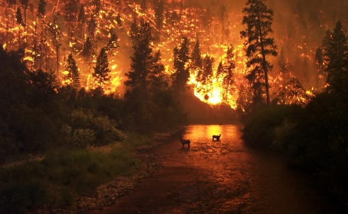 В Ленинском районе 8 часов тушили лесной пожар