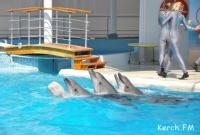 Крымские дельфины получат генетические паспорта