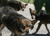 Жизнь детей дороже: Керчане вновь жалуются на бродячих собак