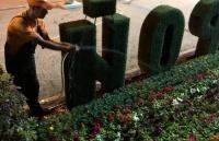 Тысячи цветов, высаженные в Керчи, поливают по графику, - Бороздин