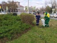 Керченский зеленхоз продолжает работы по подготовке зеленых насаждений к зиме