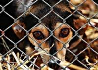 Правительство Севастополя расторгло контракт с приютом для животных