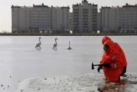 Спасатели освободили вмёрзших в лёд лебедей на озере в Евпатории