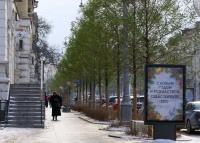 Почему на Большой Морской в Севастополе деревья остались зелёными?