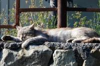 Наказание за жестокое обращение с животными внесут в КоАП