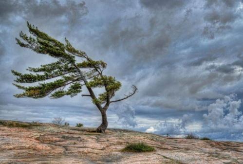 В Евпатории из-за ураганного ветра на автомобиль упало дерево