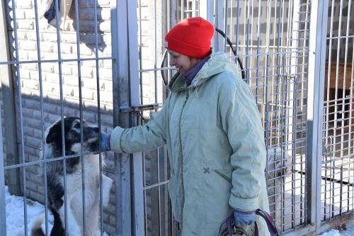 Приют для животных в Симферополе откроют в апреле