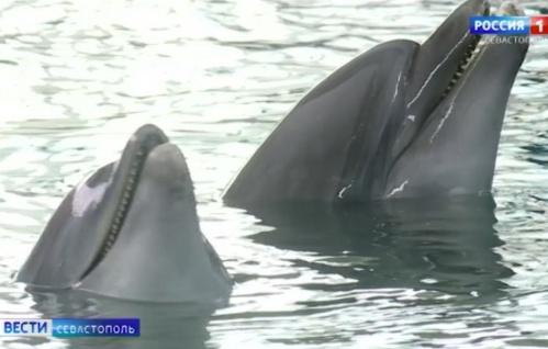 Крымские ученые разобрали отдельные слова в языке дельфинов