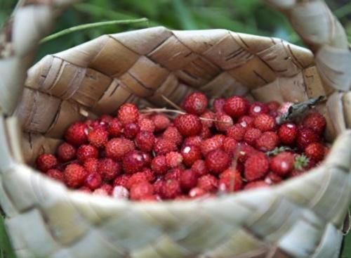 Сколько ягод и фруктов выращивается в Крыму