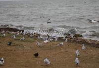 На керченском побережье зимуют птицы