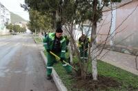 Керченский зеленхоз пересадит растения из сквера Воссоединения перед реконструкцией