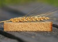 В Севастополе приставы за долги арестовали зерна на 47 миллионов рублей