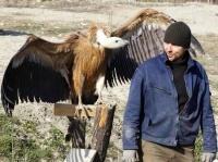 Как в горах Крыма спасли белоголового сипа