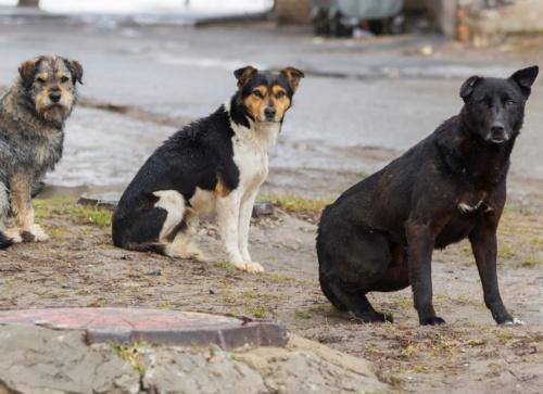 На отлов и стерилизацию бездомных животных Ялте выделили более 2 млн рублей