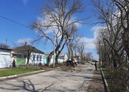 Керченский зеленхоз облагораживает кроны деревьев и кустарников