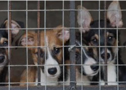 Устранить все замечания в строительстве приюта для бездомных животных в Симферополе планируют до 15 апреля