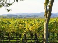Севастопольские ученые изобрели удобрение из винограда