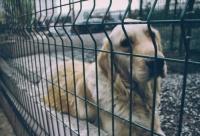 В Севастополе у бездомных животных снова «отбирают» приют