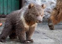 Медвежонок впервые за 10 лет родился в симферопольском зооуголке