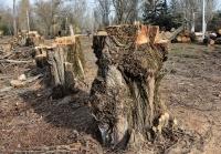 Власти заявили о целесообразности всех производимых в Симферополе сносов деревьев