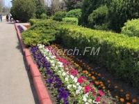 В центре Керчи высадили цветы