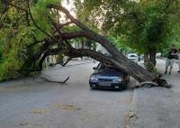 В центре Симферополя дерево упало на припаркованный автомобиль