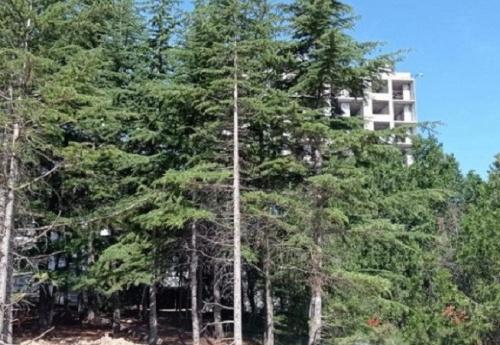 В Севастополе продолжается вырубка деревьев в парке Казачьей бухты
