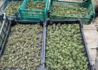 В Крыму у 54-летнего мужчины изъяли марихуану