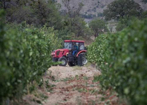 Минимущества РК: Крымский институт виноградарства и виноделия получит 6 участков под Ялтой для научных исследований