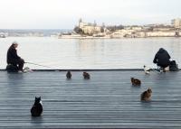 В Севастополе могут появиться специальные причалы для рыбаков-любителей