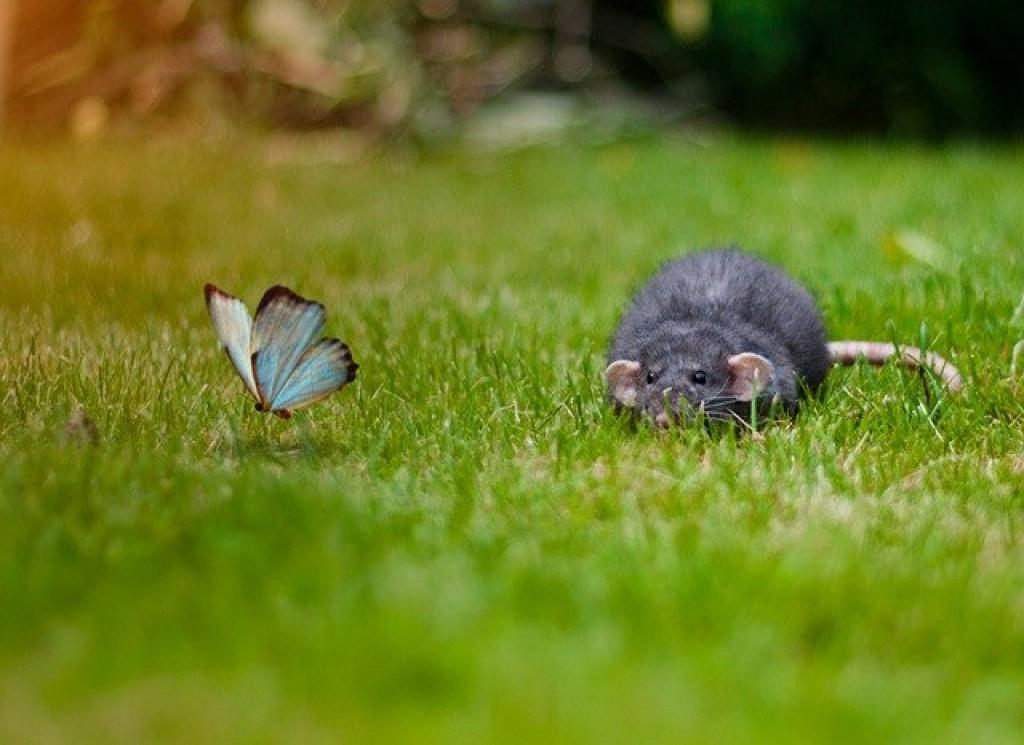 Смешные бабочки фото, спокойной