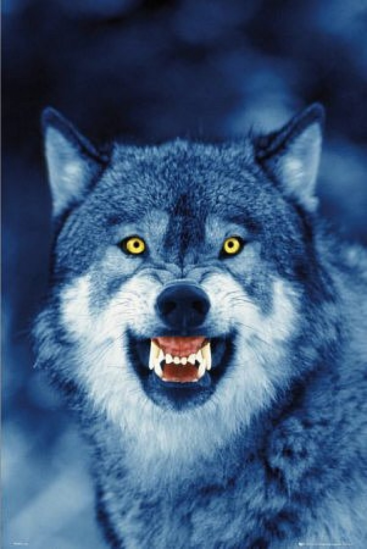 злой волк фото на телефон один